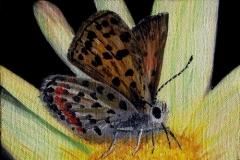 Butterfly, 1990, oil, 5 x 7 in. [02]