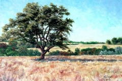 Tree at Sycamore Springs Ranch, 2003, oil, 12 x 16 in. [41]